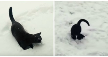 Ces chats découvrent la neige pour la 1ère fois et c'est adorable (Vidéo du jour)