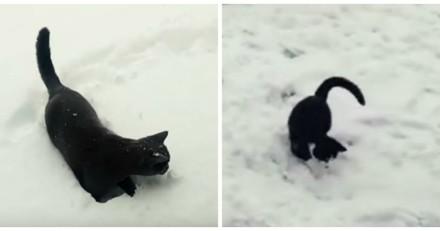 Ces chats découvrent la neige pour la 1ère fois et c'est adorable (Vidéo du jour)