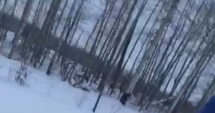 Il trouve 3 chatons prisonniers de la neige, part et revient avec un café : la suite est digne d'un film !