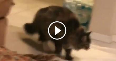 Dingue ! Ce chat qui fait un saut de ninja va vous impressionner (Vidéo du jour)