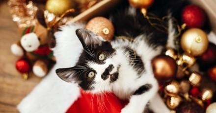 Noël 2019 : 5 jolies idées de cadeaux pour votre chat !