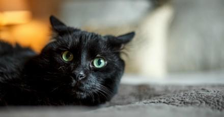 Colette, femme chatte et femme à chats