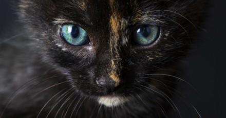 """Ce chat dit """"bonjour"""" à son maître quand il arrive (Vidéo du jour)"""