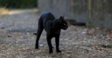 Ils abandonnent leur chat noir dans un refuge et donne une excuse qui laisse tout le monde sans voix