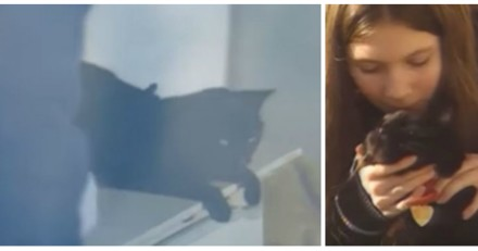 Elle entend des bruits bizarres, voit son chat et réalise la terrible vérité (Vidéo)