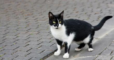 Sa chatte ne se comporte pas comme d'habitude, quand elle comprend elle fonce chez le médecin