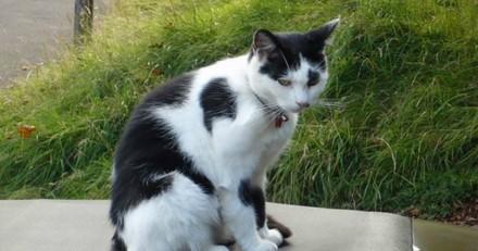 Disparue durant 9 ans, cette chatte est revenue auprès de son maître pour un ultime câlin