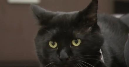 Le téléphone sonne dans le refuge : au bout du fil, une immense star du cinéma qui veut adopter un chat !