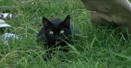 Ce chat noir a sauvé toute sa famille en quelques secondes !
