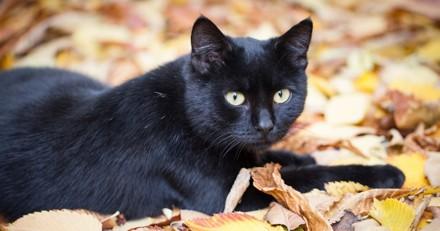 Elle confie sa chatte à des proches le temps de son déménagement, 10 ans plus tard elle reçoit un appel hallucinant