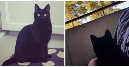 Ce chat a le droit de sortir pour la 1ere fois de sa vie, sa réaction fait rire tout le web