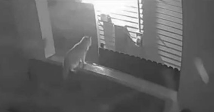 Ce chat s'est faufilé hors de sa maison et a vite compris son énorme erreur (Vidéo)