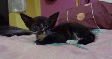 Il sauve un chaton aux oreilles de chauve-souris, un an plus tard personne n'en croit ses yeux