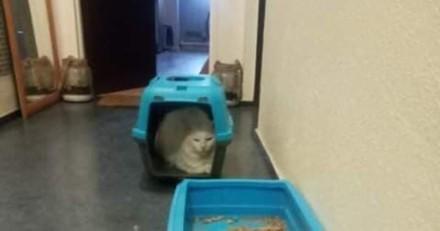 Une voisine trouve un chat sur un palier de son immeuble : la vérité fait froid dans le dos
