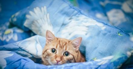 Elle s'approche du panier de sa chatte et pousse un hurlement en voyant ce qu'il y a dedans !