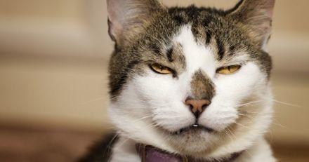 Votre chat a bien des expressions faciales, c'est juste que vous ne savez pas les déchiffrer