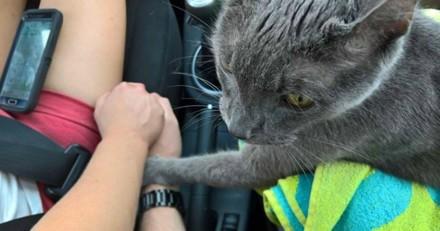 Dernier voyage chez le vétérinaire : ce chat ne veut pas lâcher la main de son humain