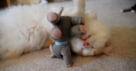 Cet adorable chaton et ses peluches vont totalement vous faire fondre (Vidéo du Jour)