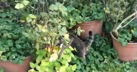 Ce chat se rend chez ses voisins pour faire quelque chose de trop mignon (Vidéo du jour)