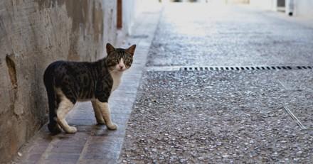 Il cherche son chat perdu, ce qu'il découvre lui glace le sang et fait la Une partout