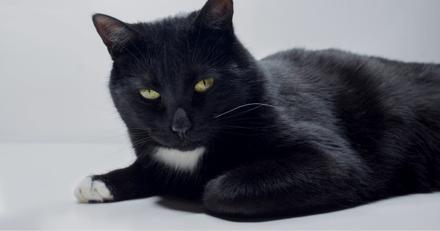 Elle retrouve un chat perdu : le propriétaire lui propose une récompense de 3000€, elle refuse !