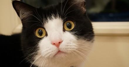 12 ans après sa disparition, elle retrouve son chat et c'est très émouvant