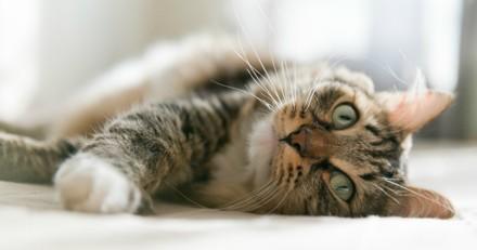 Mon chat perd ses poils : pourquoi et que faire ?