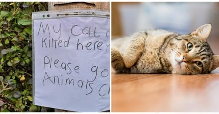 Suite à la mort de son chat renversé par une voiture, cet enfant a fait quelque chose de bouleversant