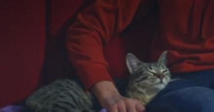 Plus Belle la Vie : les téléspectateurs choqués par les violences commises sur un chat