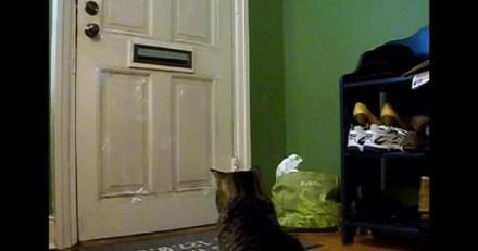 Tous les jours, ce chat se plante devant la porte d'entrée pour une raison qui laisse sans voix !