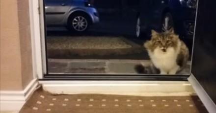 Il trouve un chat devant sa porte, le laisse entrer mais n'avait pas remarqué un détail important