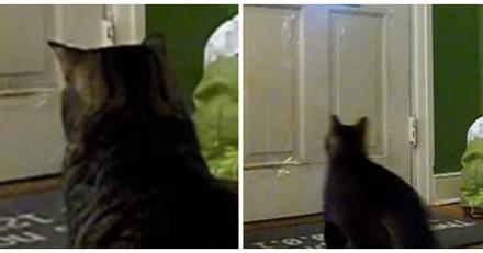 Chaque jour à midi, ce chat se poste devant la porte et ce qu'il fait ensuite fait rire le monde entier