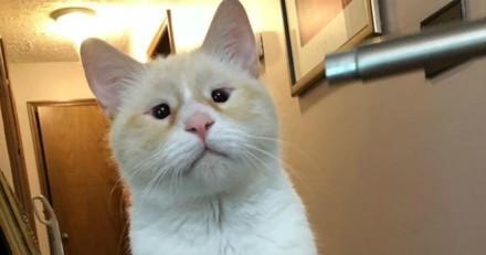 Elle se rend dans un refuge pour adopter un chat, quelques temps après elle prend une décision qui va tout changer