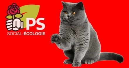 Chat alors ! Le Parti socialiste va adopter un chat !