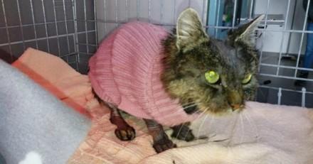 Sous le petit pull rose de ce chat triste se cache un véritable cauchemar