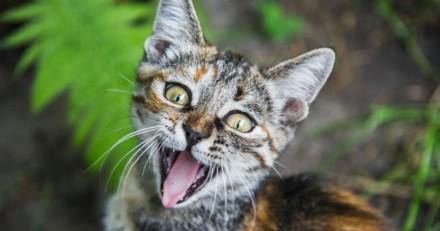 5 raisons pour lesquels votre chat miaule tout le temps