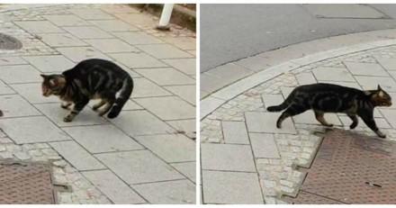 Il repère un chat en train de se faire chasser par le plus improbable des petits animaux (Vidéo)