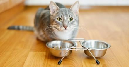 Quelle alimentation donner à un chat souffrant de problèmes rénaux?