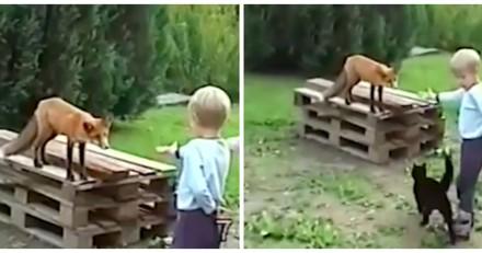 Il filme ses enfants avec un renard et la réaction de leur chat fait le tour du monde (Vidéo)