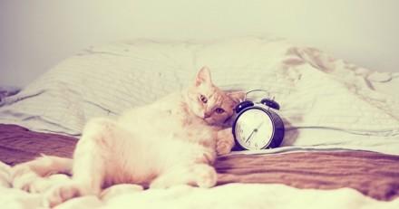 Pourquoi mon chat me réveille-il la nuit ?