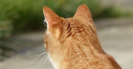Il dépose son chat chez le vétérinaire : à son retour, il ne sait pas s'il faut rire ou pleurer en voyant la tête du matou