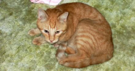 Son chat disparaît, 14 ans plus tard il reçoit un appel et a le choc de sa vie