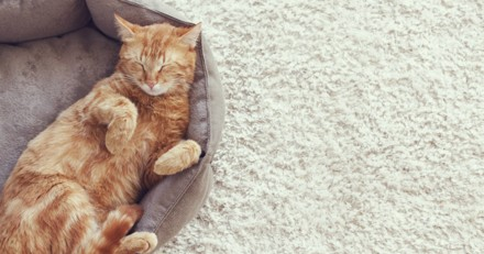 Pourquoi les chats ont souvent des problèmes de reins ? (Replay Facebook Live)