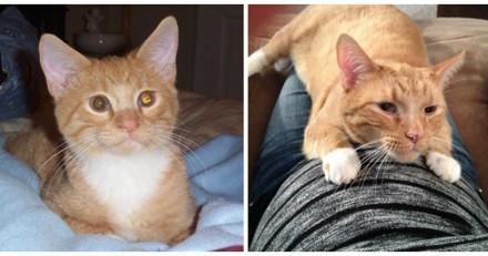 Elle adopte un chaton, 13 ans plus tard elle n'en croit pas ses yeux quand elle voit ce qu'il fait avec sa fille