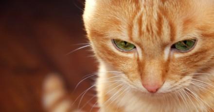 Un chat invisible devient une star sur Internet grâce à une photo bluffante