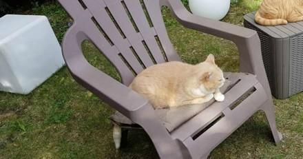 Ils trouvent un chat au fond de leur jardin, le vétérinaire leur annonce la plus triste des nouvelles