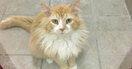 Ce chat a parcouru 19 km pour retrouver sa famille, mais la suite est bouleversante