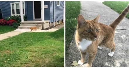 Il emménage dans un nouveau quartier et n'en revient pas de ce que fait le chat du voisin