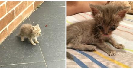 Il trouve un chaton abandonné sur un trottoir, 24 heures plus tard le changement est incroyable