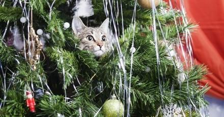 4 astuces pour que votre sapin survive aux attaques de votre chat